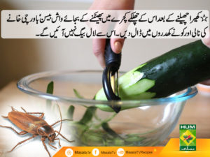 Get rid of Cockroaches from Kitchen Easily - Masala TV