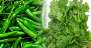 How to Store Coriander and Green Chillies