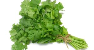 How to Store Coriander