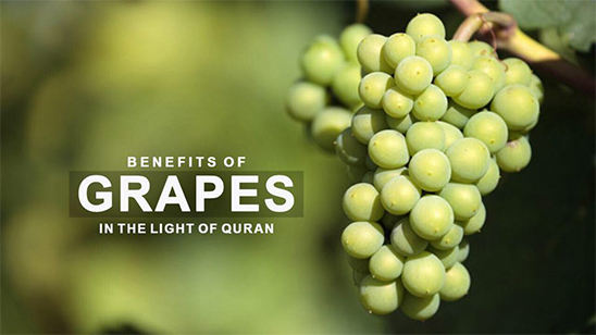Benefits of Grapes in the Light of Quran