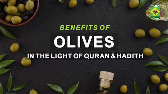 Benefits of Olives in the Light of Quran & Hadith