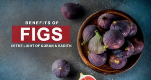 "The Prophet Muhammad (SAWW) said: ""Eat figs! If I would say a certain type of fruit was sent down to us from the heavens I would say it's a fig because it has no seeds."