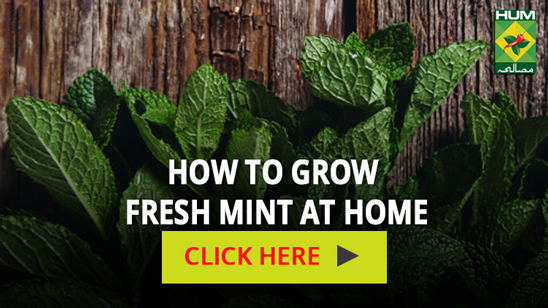 How to grow fresh mint at home   Totkay